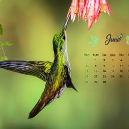june calendar calendar2020 calendarmonth junecalendar #summertime srcjunecalendar