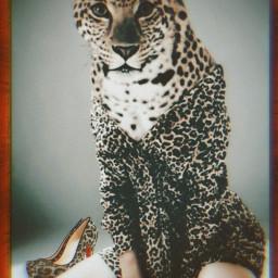 freetoedit leopard leopardprint sexywoman surreal