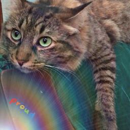 freetoedit cat cats catsofpicsart catslover rcprismlights prismlights
