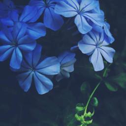 nature plantsandflowers bushes shrubs flowerybushes freetoedit