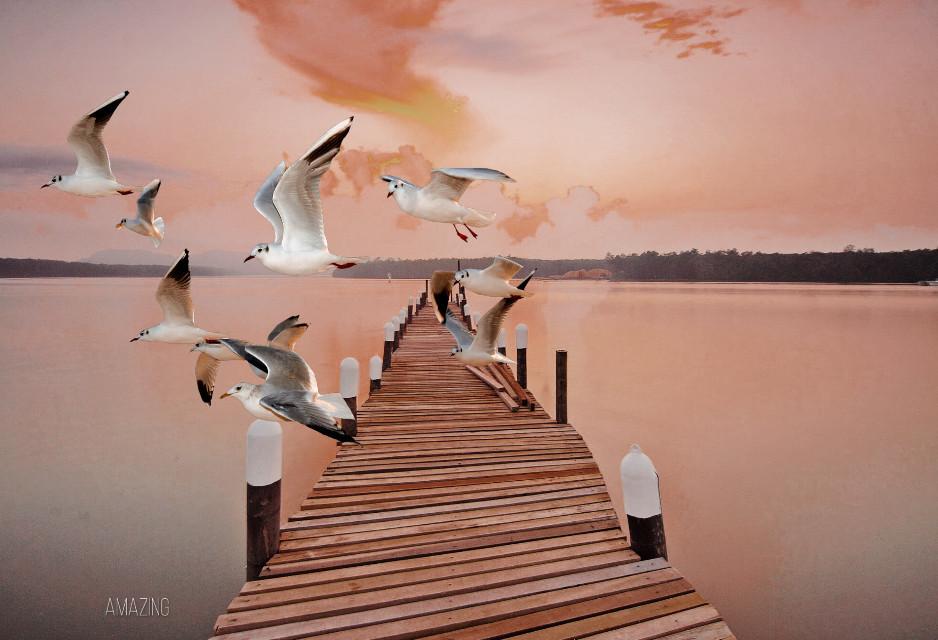 ———-    Amazing   ———   #flying    @freetoedit @picsart   ————- #freetoedit