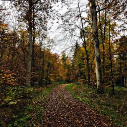 beautifulnaturecolors forest naturelover