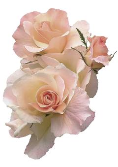 flowers pinkflower whiteflowers freetoedit
