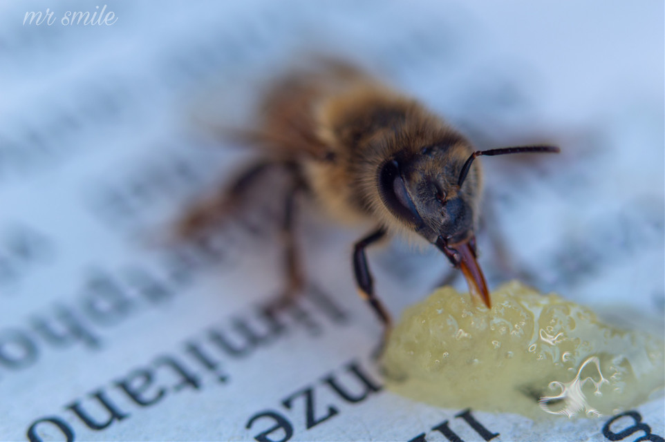 #freetoedit #naturephotography #closeup #bee #insect