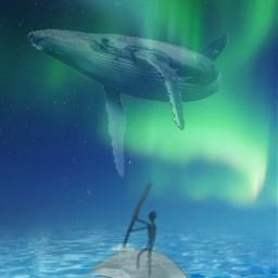 freetoedit polarlights whales animals sea