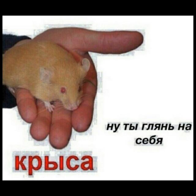 #freetoedit #rat #крыса #крыска #подружка #💋 #🐁 #🐀
