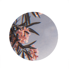 freetoedit фон листья pro background