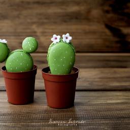 macaronssweet dessert cactuslover macarons photography