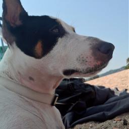 freetoedit summer mydog dog beachphotography pcsummertime