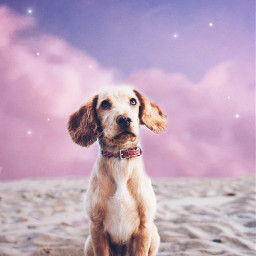 dogs cute clouds sweet awesome freetoedit