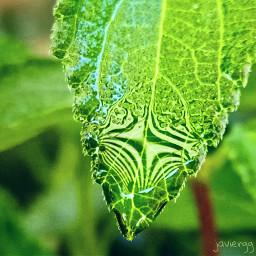 drop drops raindrops raindropsflower gota