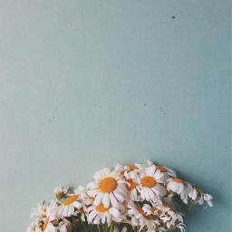 flowers summertime freetoedit
