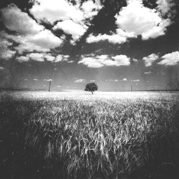 freetoedit blackandwhite tree clouds madewithpicsart