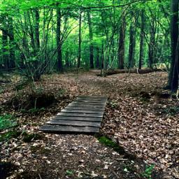 freetoedit kinora walking walkingtime forest