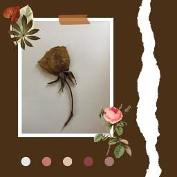 remix roses driedrose freetoedit