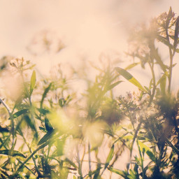nature wildplants againstthelight softcontrast warmsunnylight freetoedit
