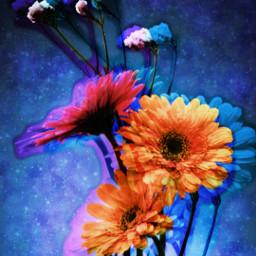 freetoedit glitch flowers daisy spring