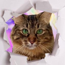 freetoedit cat engajamento marketingdigital sdv rcrippedpaper rippedpaper