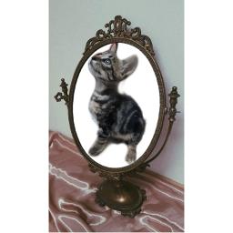 freetoedit ecmirrormirror mirrormirror