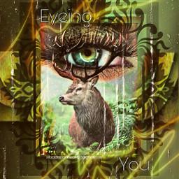 eye wildlife deers