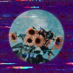 freetoedit sunflower glitch glitching purple
