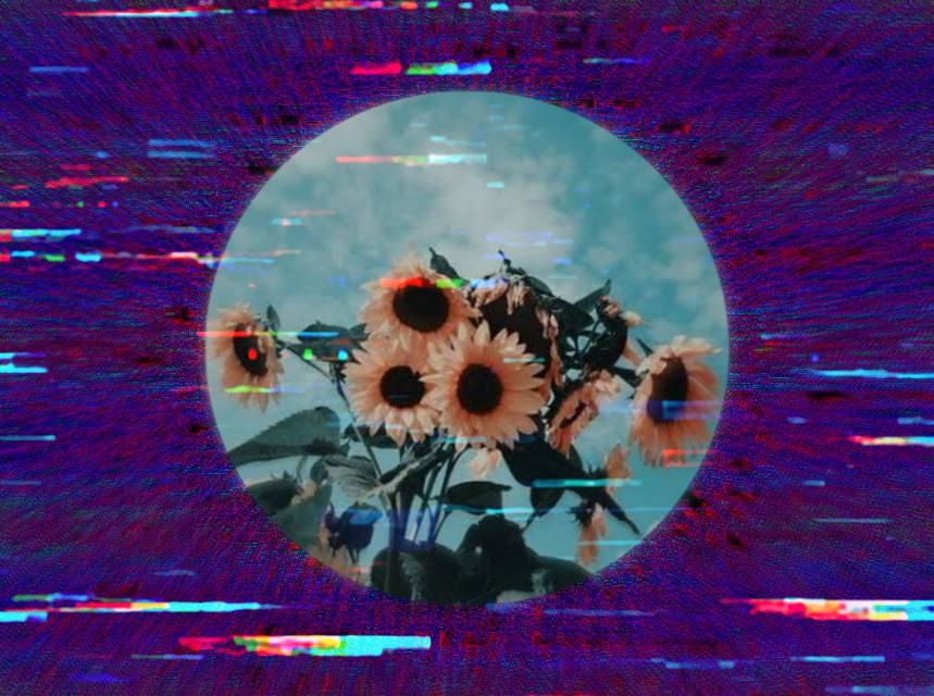 •🌻🌻🌻• #freetoedit #sunflower #glitch #glitching #purple #flowers #remixit