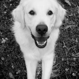 dog animal animallovers bnw