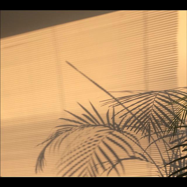 #freetoedit #golden #goldenhour #palmtrees #palmtree #maskeffect #bokeh #tumblr #aesthetic #aesthetics #aesthetictumblr #aestheticsky #gold #aestheticboard #window #lights #lighting #lightingeffect #vsco #vintage