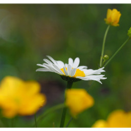 flowers somervibe meadow blumenwiese nature freetoedit