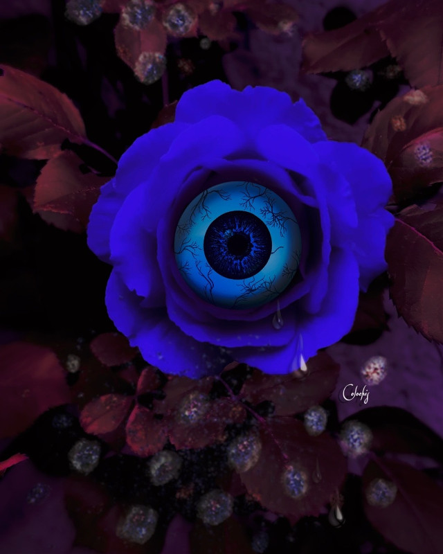 #freetoedit #manipulation #madewithpicsart#surreal #Eye #rose #artistdigital #colochis89 Thanks for the picture😍🌹🙏🏻 @rimi83