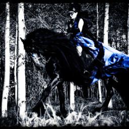freetoedit horseslove googlephoto colorsplash fresian eccolorpop colorpop