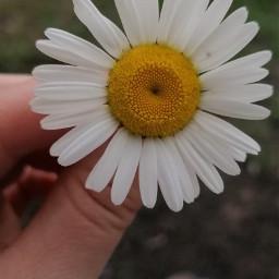 freetoedit flower nature naturephotography flowerphotography