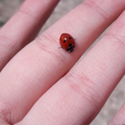 freetoedit ladybug🐞 delicate small cute