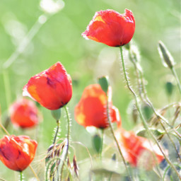 france flower love emotions cute freetoedit