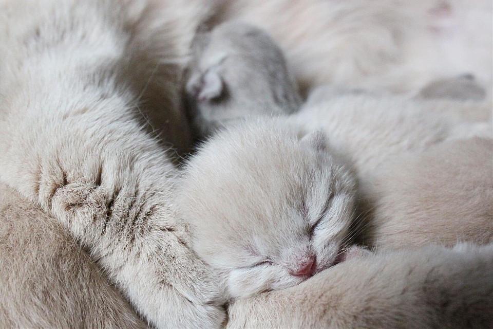 #cat #cats #animal #animals #pets #love #cute #funny #follow #picsart #photography #like #follow4follow #followforfollow #likeit #likes #like4follow