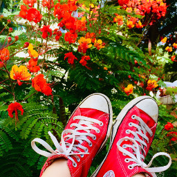 converse prideofbarbados pcmyfavoritekicks myfavoritekicks myfavoriteshoes shoes