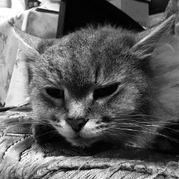 cat behemoth