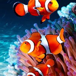 freetoedit fish sea seacreatures animals ircwaterworld waterworld