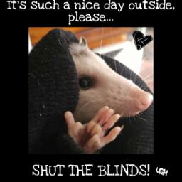 opossum possum emo meme freetoedit