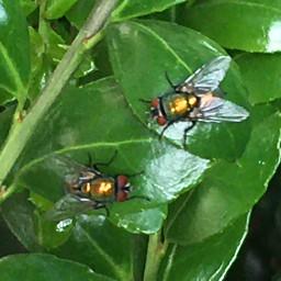 fly flies nature macro photography