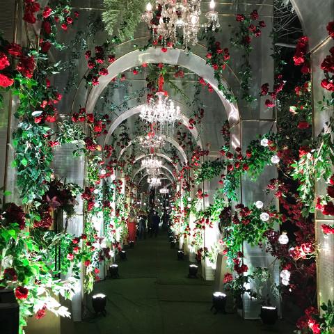 #freetoedit,#wedding,#of,#roses,#pcamazingarches,#amazingarches,#arches