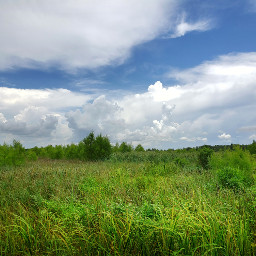 freetoedit landscape grasses trees sky