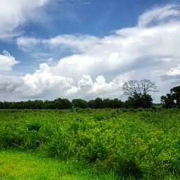 freetoedit landscape nature photography grasses