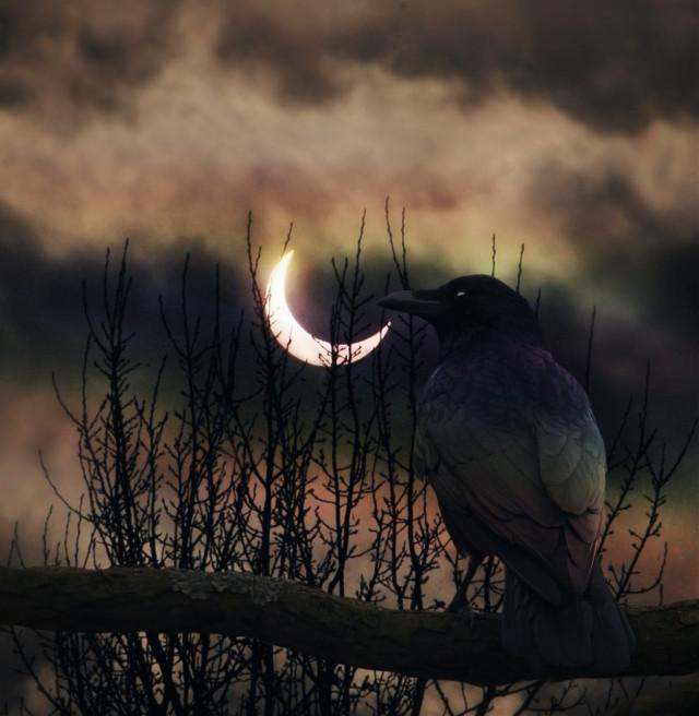 #freetoedit #doubleexposure #night #bird Op by VK.com