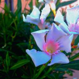 flowers garden beautifullife mylife myphotography