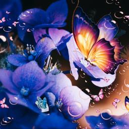 freetoedit makeawesome papicks picsartedit butterflies rcholographicbutterflies