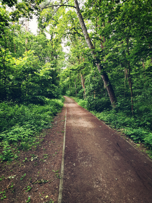 #freetoedit #nature #forest #forestroad #trees #green #beautifulday #beautifulnature #myphoto #Poland