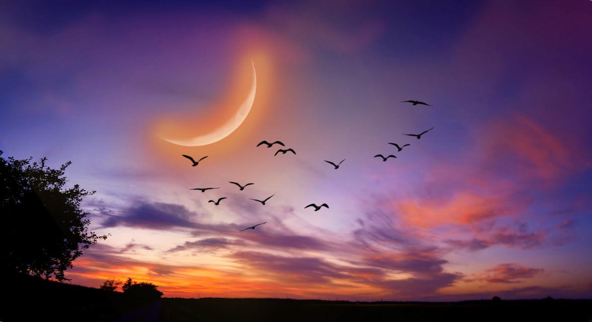 #freetoedit #landscape #scenery #naturesbeauty #sunset #flockofbirds #nightsky #moonlight #stickers #dodger #dodgereffect #keepitsimple #myedit #madewithpicsart