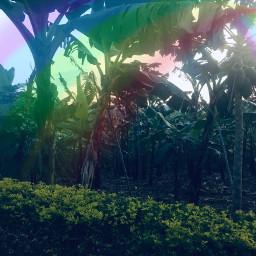 freetoedit nature rainbow vegetation forest