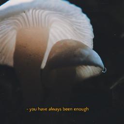 freetoedit mushroom photography edit grunge
